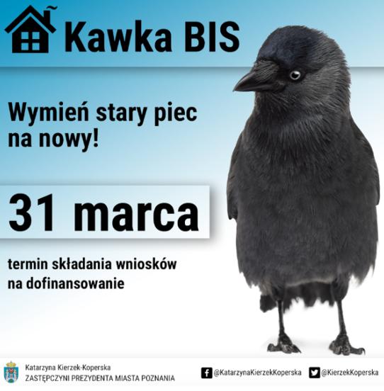 Kawka Bis w Poznaniu