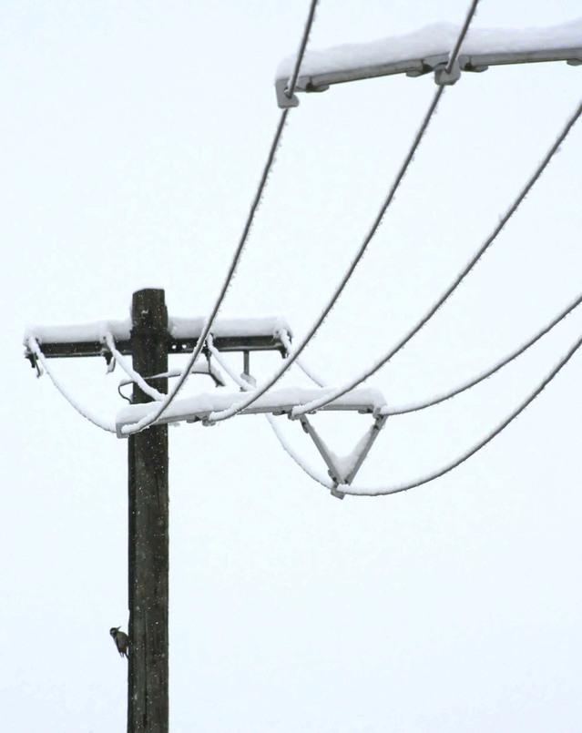 ośnieżona linia energetyczna
